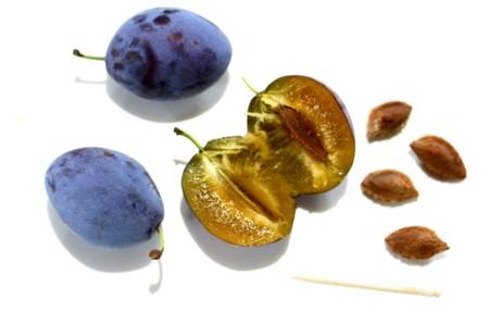プルーンの実と種子。(28.9.11)