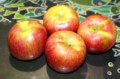 落下を恐れ、早めに収穫した「シナノスイート」りんご。(28.10.3)
