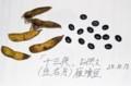 望月で栽培している、「雁喰豆」。