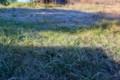 隣の草原に、強い霜が降りた朝。(28.11.5)