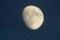 「十月十二日」のお月さま。(28.11.11)(16:50)