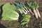 野良土産の野菜たち。(28.11.13)