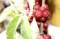 「砂山」の「茱萸」は、「アキグミ(秋茱萸)」?(28.11.21)