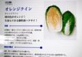 「ハクサイ(白菜)・オレンジクイン」。(28.11.)