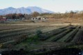 野良は、すっかり冬景色に。(28.11.23)