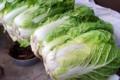 縁側に並べられている「ハクサイ(白菜)」。(28.11.28)