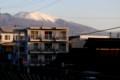 凍てついた朝の、「景観保全作物水田」。(28.11.30)