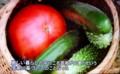 「賢治自耕の地」で、「野菜」栽培。(29.1.7)