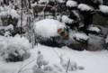 約15センチほどの積雪か。(29.1.9)