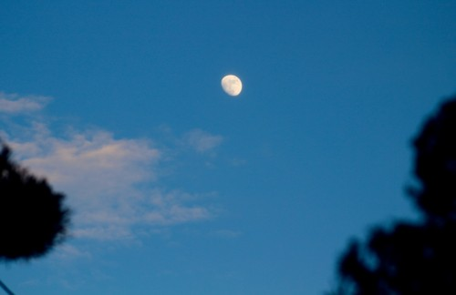 青空に映える、「十二月十二日」のお月さま。(29.1.9)(16:40)