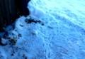 雪上に、スズメが啄み落とした籾殻…。829.1.16)