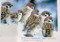 「スズメの四季 冬」(29.1.18)