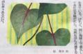 カラーの挿絵は、「サツマイモの葉っぱ」。(29.1.27)
