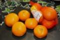 ビタミン補給のための「ミカン(蜜柑)」(29.1.29)