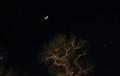 「正月五日」のお月さまと金星・宵の明星。(29.2.1)(17:42)