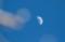 「正月八日」のお月さま・上弦の月。(29.2.4)(15:51)