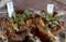 挿し芽を試みた「ホトケノザ」が発根。(29.2.6)