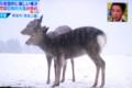 テレビ画面、奈良公園・鹿にも雪降り。(29.2.9)