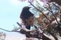 枝に止まり、風を避ける「ツグミ(鶫)」。(29.2.10)