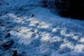 日が差し始めた、庭先の積雪。(29.2.19)
