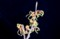 「マンサク(満作・万作)」の花が開く。(29.2.24)