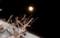 「二月十五日」満月・望 (29.3.12)(19:30)