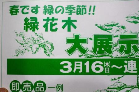 緑花木売り出し広告(29.3.16)