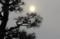 薄雲に覆われた、夕方の太陽。(29.3.18)