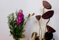 玄関に飾った、お彼岸の花。(29.3.20)