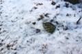 地面の積雪も凍り…。(29.3.22)