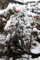 年度替わりに、春の大雪。(29.4.1)