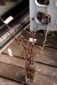 花の形比べを計画、小枝を水挿し。(29.4.4)
