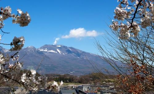 浅間山と桜、上ノ城址から定点撮影。(29.4.23)