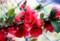 曇り空、目に染みる「ボケ(木瓜)」の花。(29.5.1)