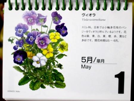 北海道カレンダー:5月1日は、「ヴィオラ」。(29.5.1)