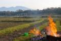 朝飯前、農業ゴミの焼却。(29.5.3)