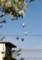 西方から、「バルーン」が飛来…。(29.5.5)(7:10)