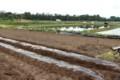 野菜栽培のための畝立て…。(29.5.16)