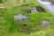 「第二賢治ガーデン」・「下ノ田んぼ」に、水を張って…。(29.5.179