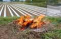 畑のゴミ、焼却日和…。(29.5.17)