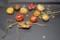お土産にいただいた「琉球カラスウリ」の実・種子。(29.6.1)