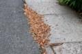 路面に飛ばされた「松の花粉」。(29.6.3)