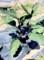 「ナス(茄子)」は、三本仕立てが、基本。(29.6.20)