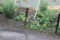 裏の砂利道には、水溜りが…。(29.6.21)