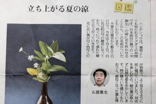 読売新聞コラム・花の図鑑 「ハンゲショウ」(29.7.2)