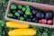 「夏野菜」の収穫。(29.7.14)