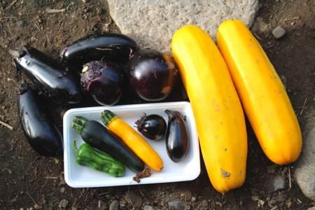 昨日に採った「お化け野菜」。(29.7.15)
