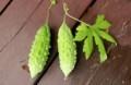 今朝、収穫できた「白ゴーヤ」の実。(29.8.31)