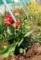 秋の気配、「グランドわき花壇」。(29.9.2)