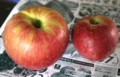 スーパーちらしに、「つがる・リンゴ」が登場。(29.9.11)